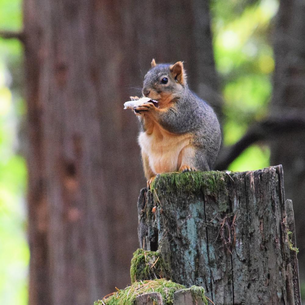 squirrel square 2