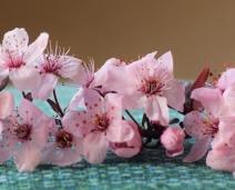 Faith, hope & joy – in full bloom