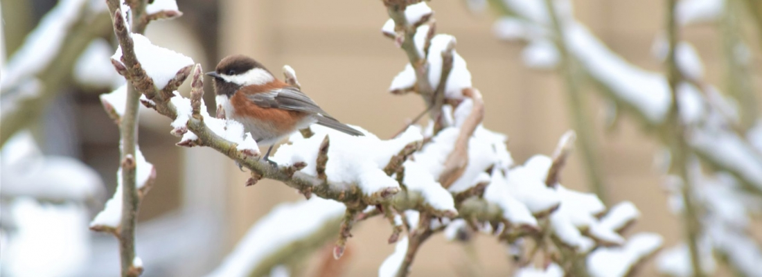 Valentine's Day – it's for the birds